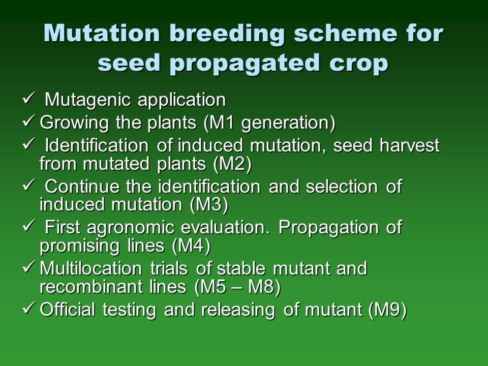 Mutation breeding scheme for seed propagated crop Mutagenic application Mutagenic application Growing the plants (M1 generation) Growing the plants (M