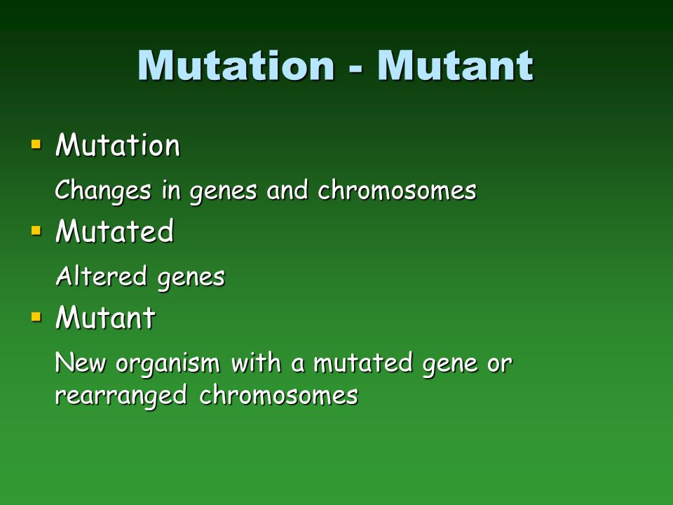 Mutation Breeding  Advantages –Screen very high populations (cell based) –Can apply selection to single cells  Disadvantages –Many mutations are non-heritable –Requires dominant mutation (or double recessive mutation); most mutations are recessive  Can avoid this constraint by not applying selection pressure in culture, but you loose the advantage of high through-put screening – have to grow out all regenerated plants, produce seed, and evaluate the M 2  Alternative: perform on haploid cell lines