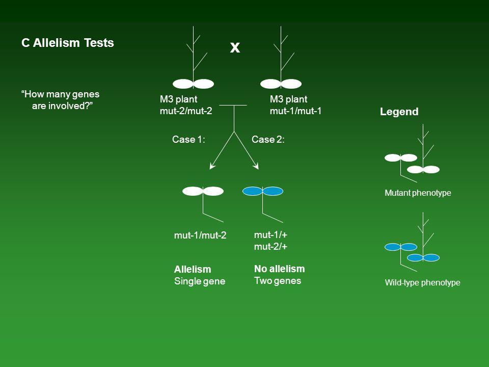 """M3 plant mut-1/mut-1 x M3 plant mut-2/mut-2 C Allelism Tests mut-1/mut-2 Allelism Single gene mut-1/+ mut-2/+ No allelism Two genes Case 1:Case 2: """"Ho"""
