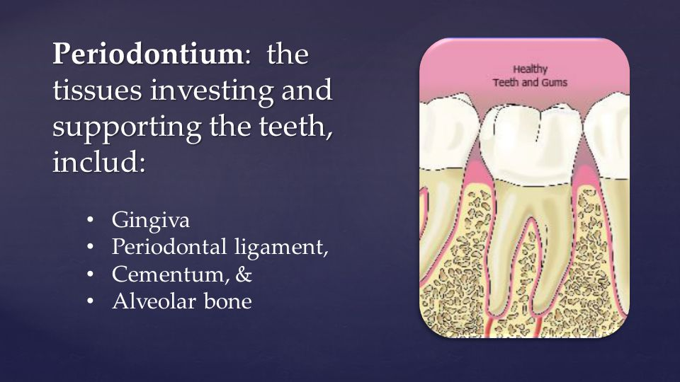 Periodontium: the tissues investing and supporting the teeth, includ: Gingiva Periodontal ligament, Cementum, & Alveolar bone