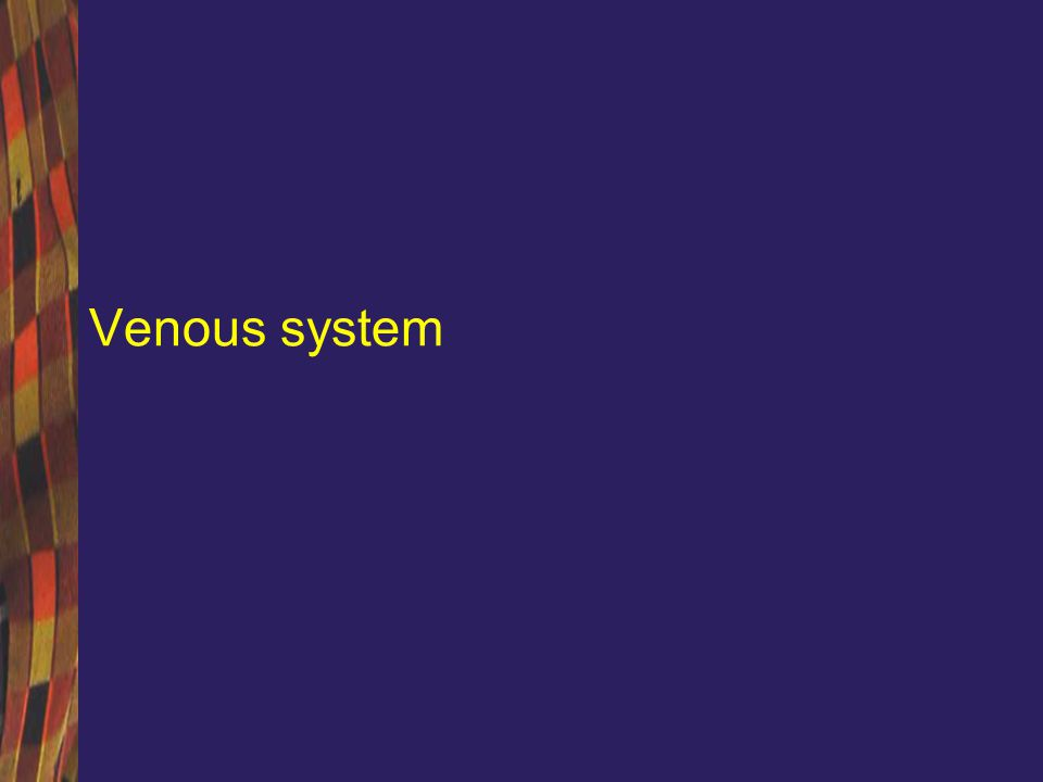 Cerebral venous system Superficial system: –Drains into the venous synuses Central system –Drain in a large, short venous trunk – the great vein of Galien Basal system –Drains the blood into the basilar vein and then to the great vein of Galien Jugular veins