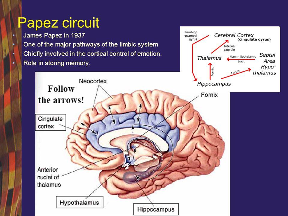 Sindromul Kluver Bucy Heinrich Kluver si Paul Bucy, 1939 Lobectomie temporala bilaterala – prima dovada experimentala a implicarii circuitului luii Papez in expresia emotionala Lipsa de afect, agnozie vizuala, expresie sexuala nediscriminata, pierdere severa a memoriei