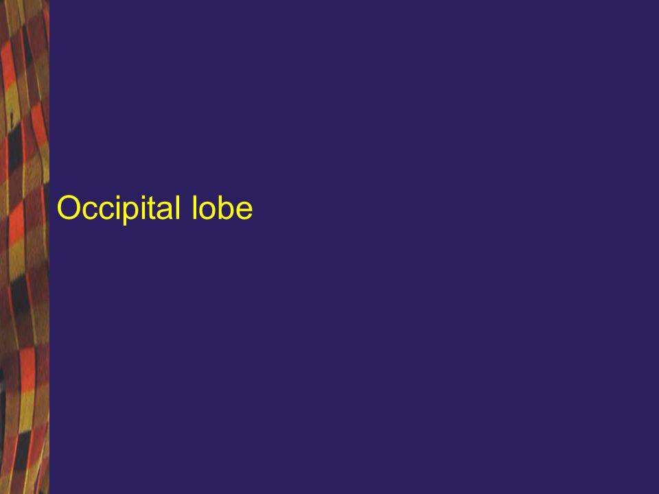 Lobul occipital O mica parte a portiunii dorsolaterale a emisferelor Functiile sunt legate de vedere –Perceptie vizuala –Recunoastere in relatie cu spatiul si timpul –Ariile 17, 18 si 19 Brodmann –Aria 17 (striata) este localizata la nivelul scizurii calcarine si in vecinatatea acesteia; este centrul de receptie al informatiei vizuale (culoare, dimensiuni, forma, miscare, iluminare, transparenta) –Aria 18 (parastriat) si aria 19 (peristriat) ocupa restul suprafetei interemisferice la nivel occipital, avand rol de cortex de asociatie Tulburarile care rezulta din lezarea lobului occipital pot fi de natura iritativa sau datorate unui deficit, cu simptomatologie uni sau bilaterala
