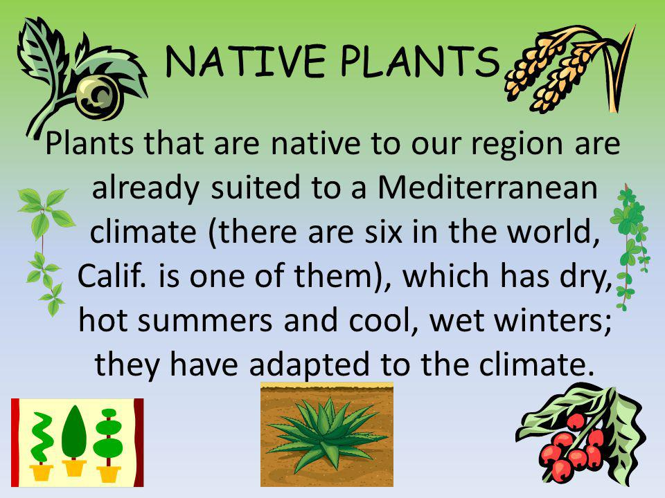 NATIVE PLANTS Plants that are native to our region are already suited to a Mediterranean climate (there are six in the world, Calif.