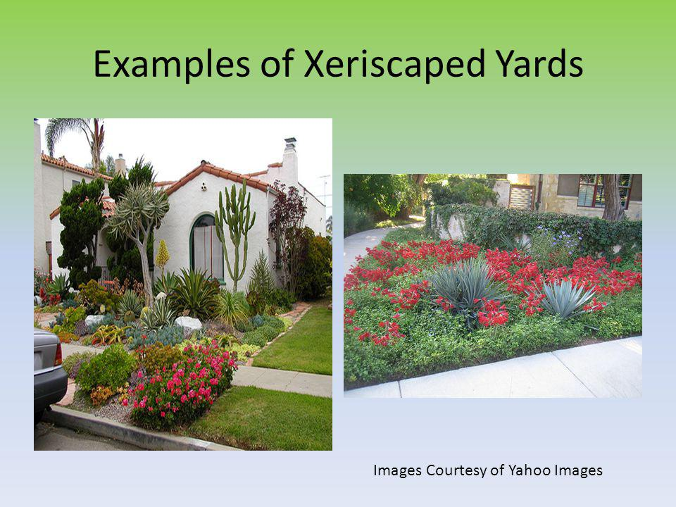 Examples of Xeriscaped Yards Images Courtesy of Yahoo Images