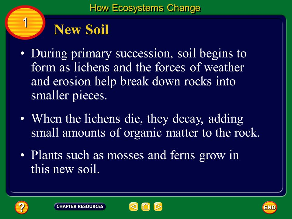 During primary succession, soil begins to form as lichens and the forces of weather and erosion help break down rocks into smaller pieces.