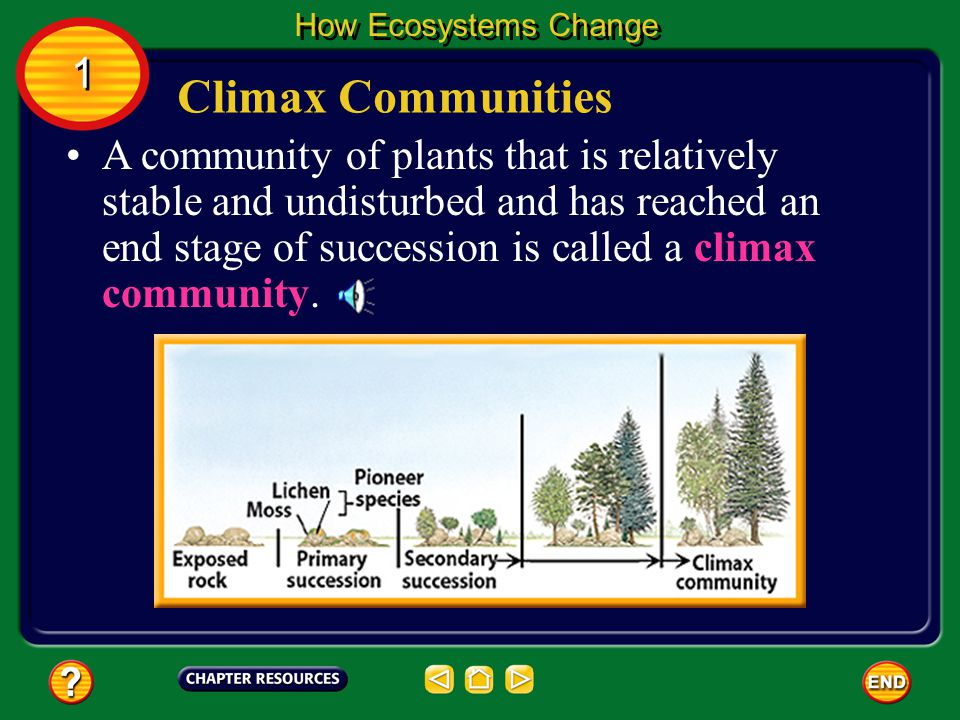 A community of plants that is relatively stable and undisturbed and has reached an end stage of succession is called a climax community.