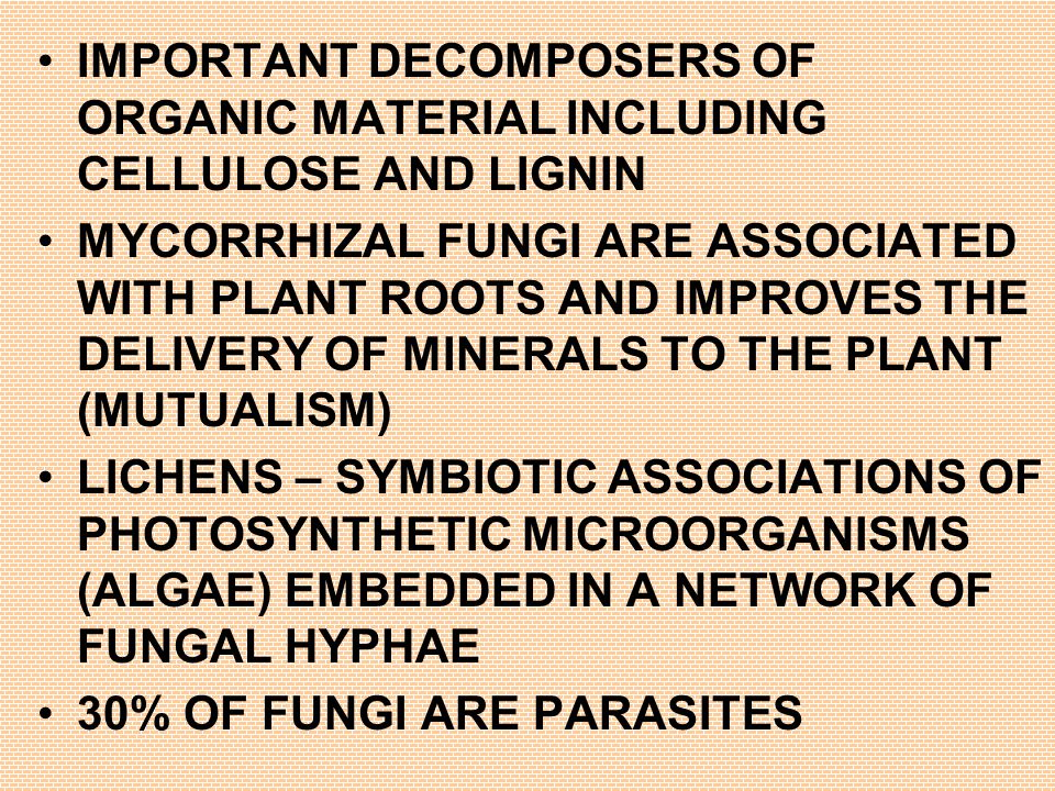 IMPORTANT DECOMPOSERS OF ORGANIC MATERIAL INCLUDING CELLULOSE AND LIGNIN MYCORRHIZAL FUNGI ARE ASSOCIATED WITH PLANT ROOTS AND IMPROVES THE DELIVERY OF MINERALS TO THE PLANT (MUTUALISM) LICHENS – SYMBIOTIC ASSOCIATIONS OF PHOTOSYNTHETIC MICROORGANISMS (ALGAE) EMBEDDED IN A NETWORK OF FUNGAL HYPHAE 30% OF FUNGI ARE PARASITES