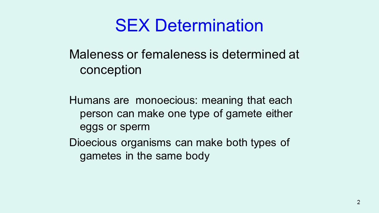 2 SEX Determination Maleness or femaleness is determined at conception Humans are monoecious: meaning that each person can make one type of gamete eit
