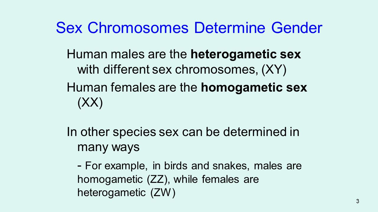44 Imprints are erased during meiosis - Then reinstituted according to the sex of the individual Figure 6.13