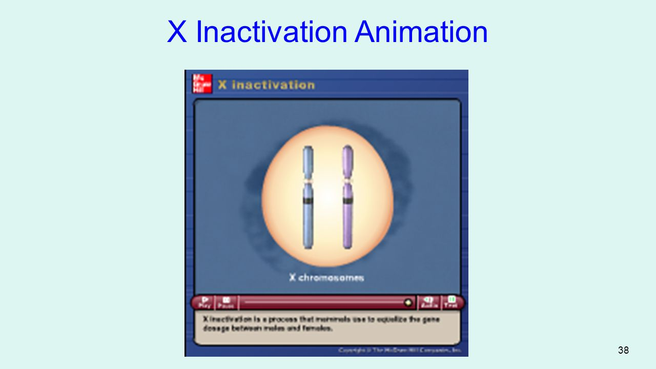 38 Figure 2.3 X Inactivation Animation Please note that due to differing operating systems, some animations will not appear until the presentation is