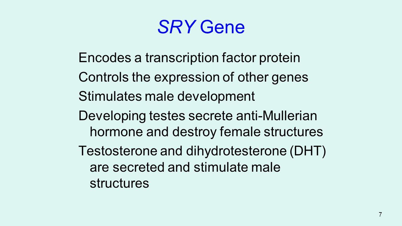 18 Inheritance related to sex Genes located exclusively on the x chromosome are called sex-linked Genes that occur only on the Y chromosome can produce their effects only in males and are called Holandric genes The mechanisms where a given trait is limited to one sex is called sex- limited and fi dominance of a given allele depends on the sex of the bearer is called sex-influenced.