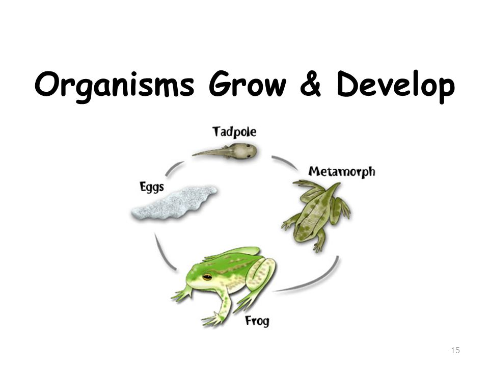 Organisms Grow & Develop 15
