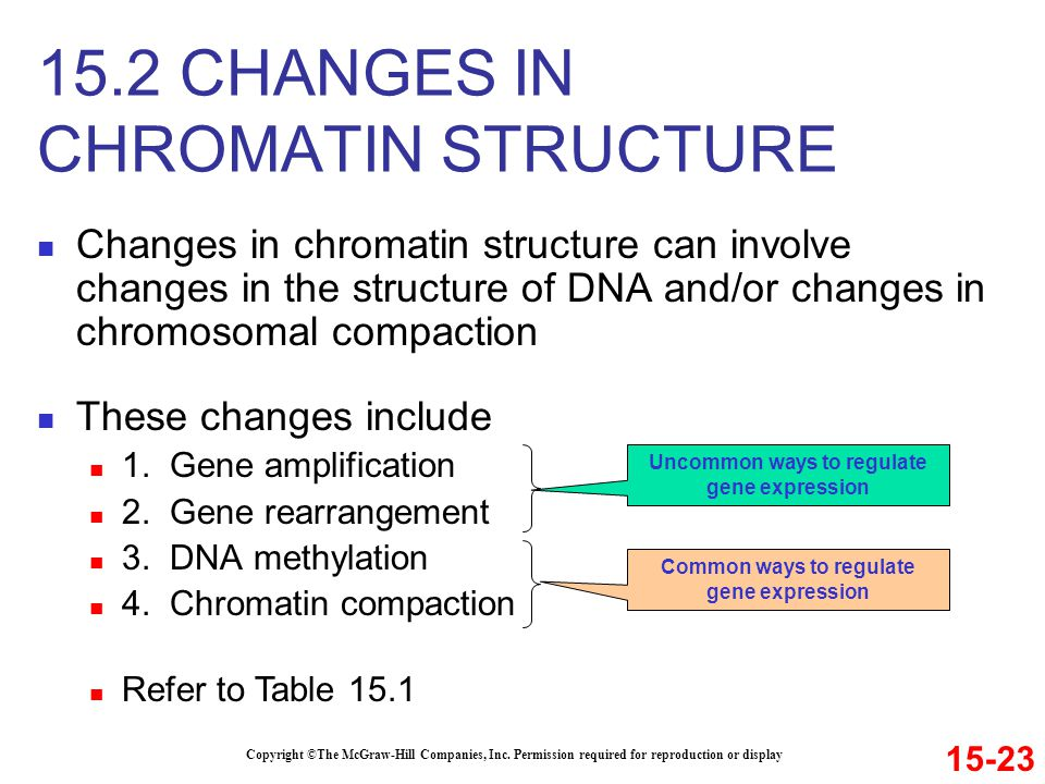 Changes in chromatin structure can involve changes in the structure of DNA and/or changes in chromosomal compaction These changes include 1. Gene ampl