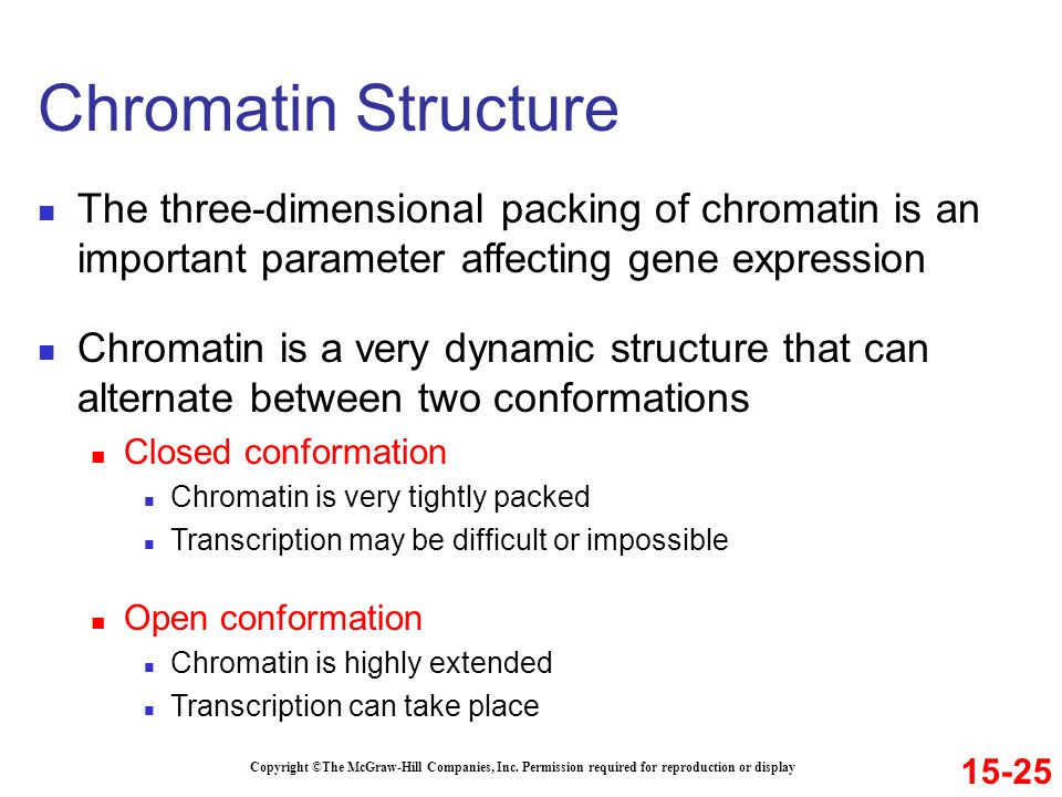 The three-dimensional packing of chromatin is an important parameter affecting gene expression Chromatin is a very dynamic structure that can alternat