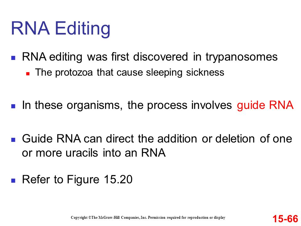 RNA editing was first discovered in trypanosomes The protozoa that cause sleeping sickness In these organisms, the process involves guide RNA Guide RN