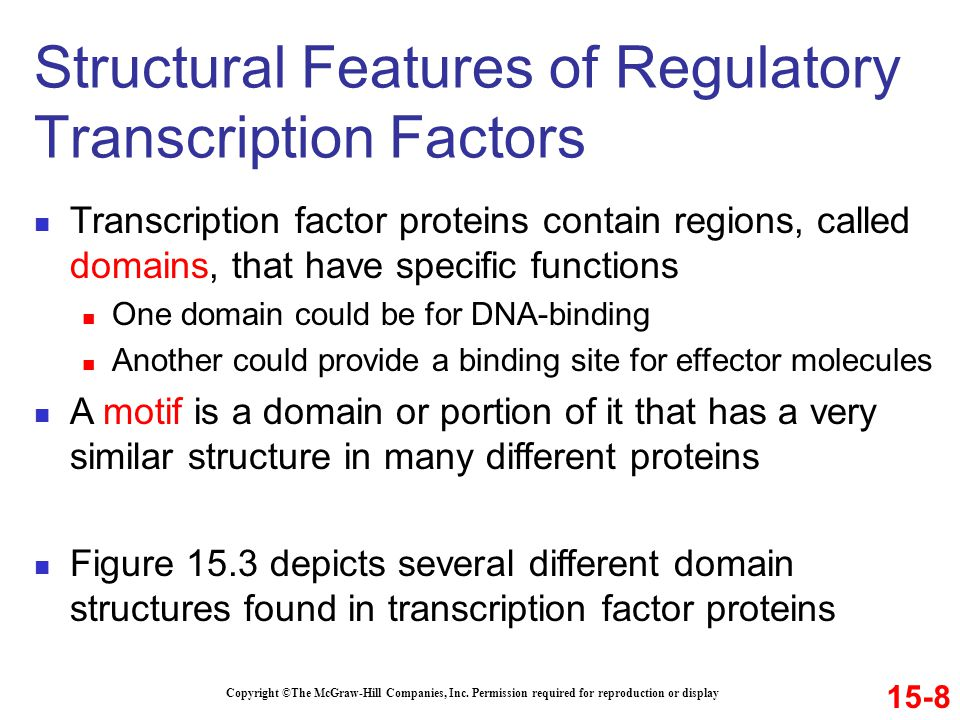 Transcription factor proteins contain regions, called domains, that have specific functions One domain could be for DNA-binding Another could provide
