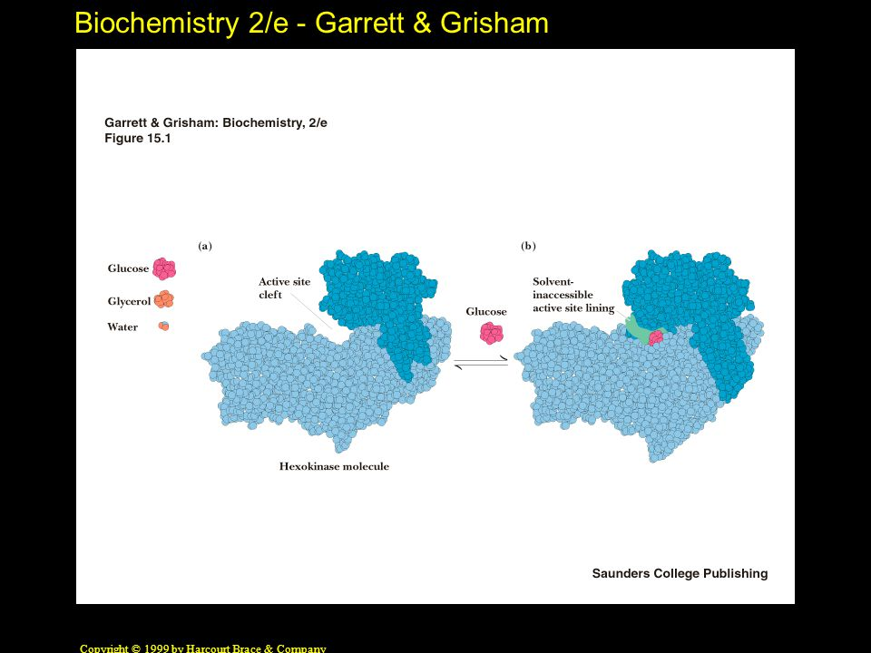Biochemistry 2/e - Garrett & Grisham Copyright © 1999 by Harcourt Brace & Company Models for Allosteric Behavior Monod, Wyman, Changeux (MWC) Model: allosteric proteins can exist in two states: R (relaxed) and T (taut) In this model, all the subunits of an oligomer must be in the same state T state predominates in the absence of substrate S S binds much tighter to R than to T