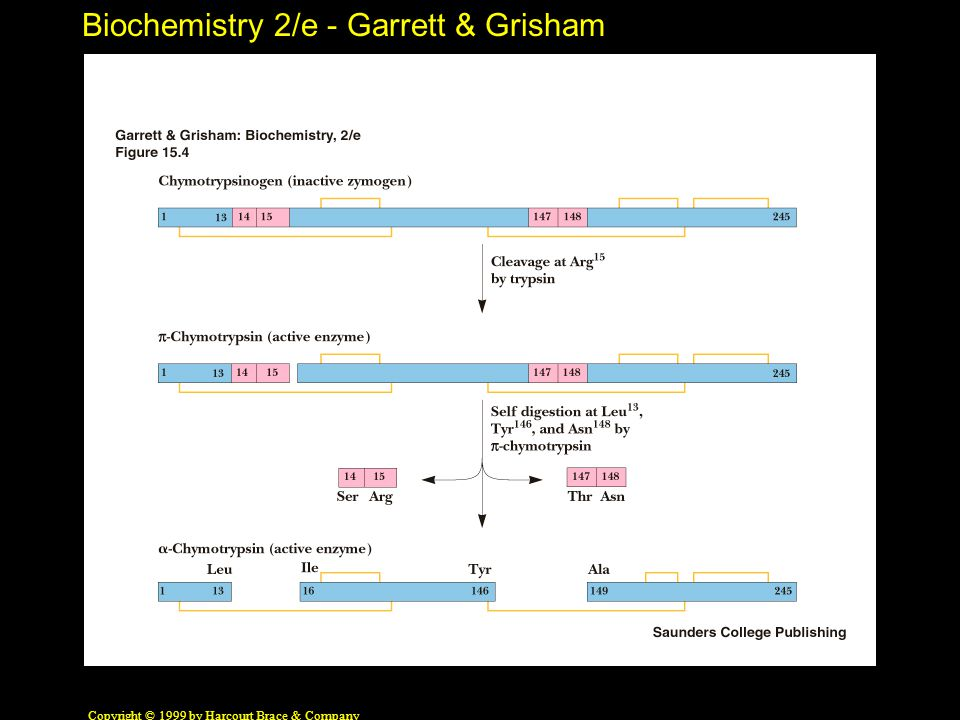 Biochemistry 2/e - Garrett & Grisham Copyright © 1999 by Harcourt Brace & Company 2,3-BPG and Hb The inside story......