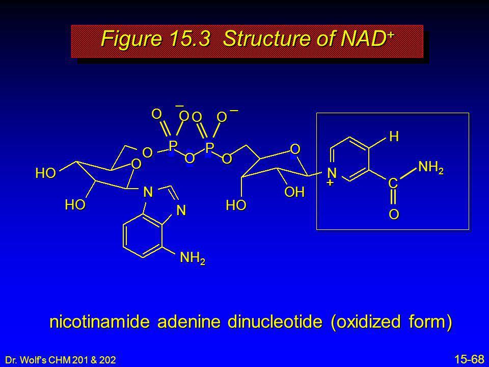 Dr. Wolf's CHM 201 & 202 15-68 nicotinamide adenine dinucleotide (oxidized form) HO HO O O N N NH 2 P O P O O HO OH H C O N O O OO + __ Figure 15.3 St