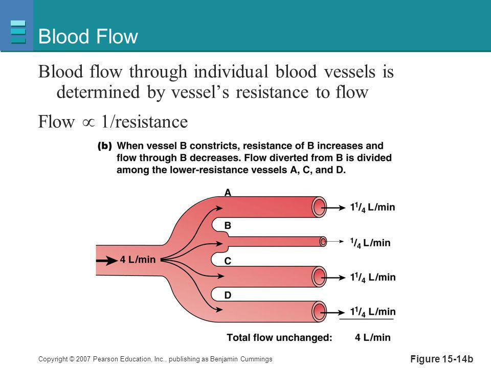 Copyright © 2007 Pearson Education, Inc., publishing as Benjamin Cummings Figure 15-14b Blood Flow Blood flow through individual blood vessels is dete