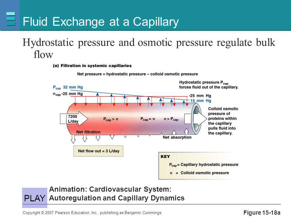Copyright © 2007 Pearson Education, Inc., publishing as Benjamin Cummings Figure 15-18a Fluid Exchange at a Capillary Hydrostatic pressure and osmotic