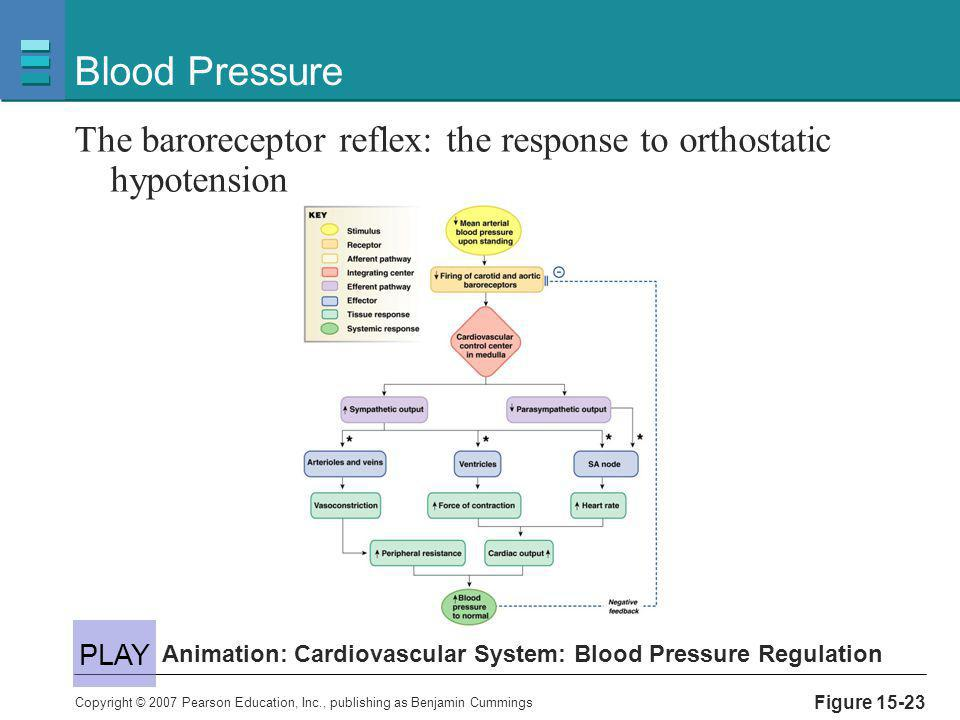 Copyright © 2007 Pearson Education, Inc., publishing as Benjamin Cummings Figure 15-23 Blood Pressure The baroreceptor reflex: the response to orthost