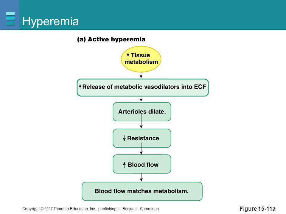 Copyright © 2007 Pearson Education, Inc., publishing as Benjamin Cummings Hyperemia Figure 15-11a