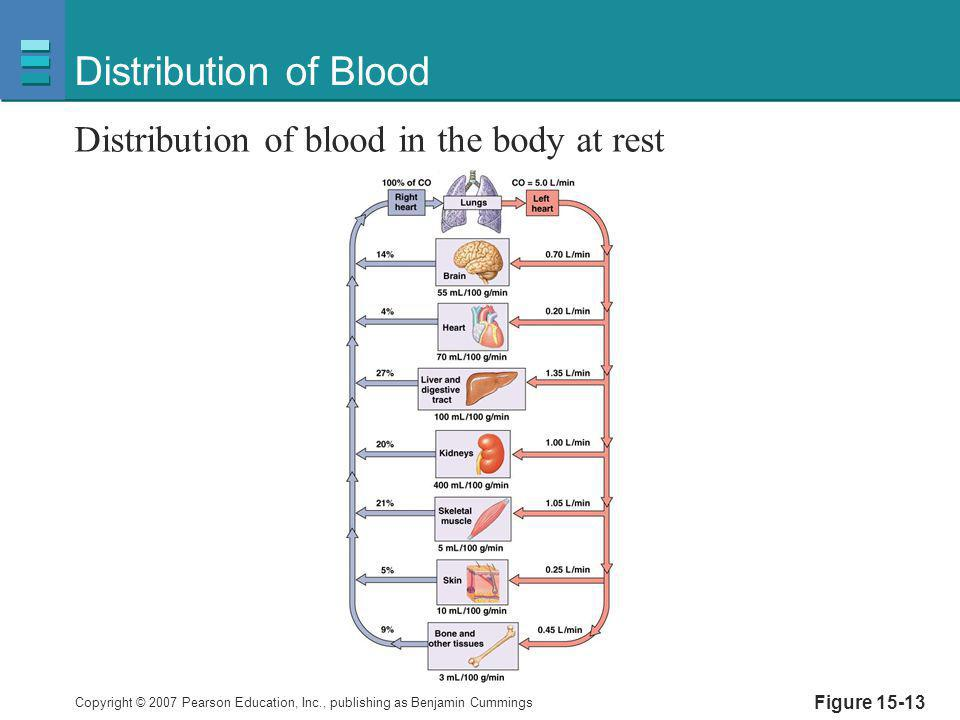 Copyright © 2007 Pearson Education, Inc., publishing as Benjamin Cummings Figure 15-13 Distribution of Blood Distribution of blood in the body at rest