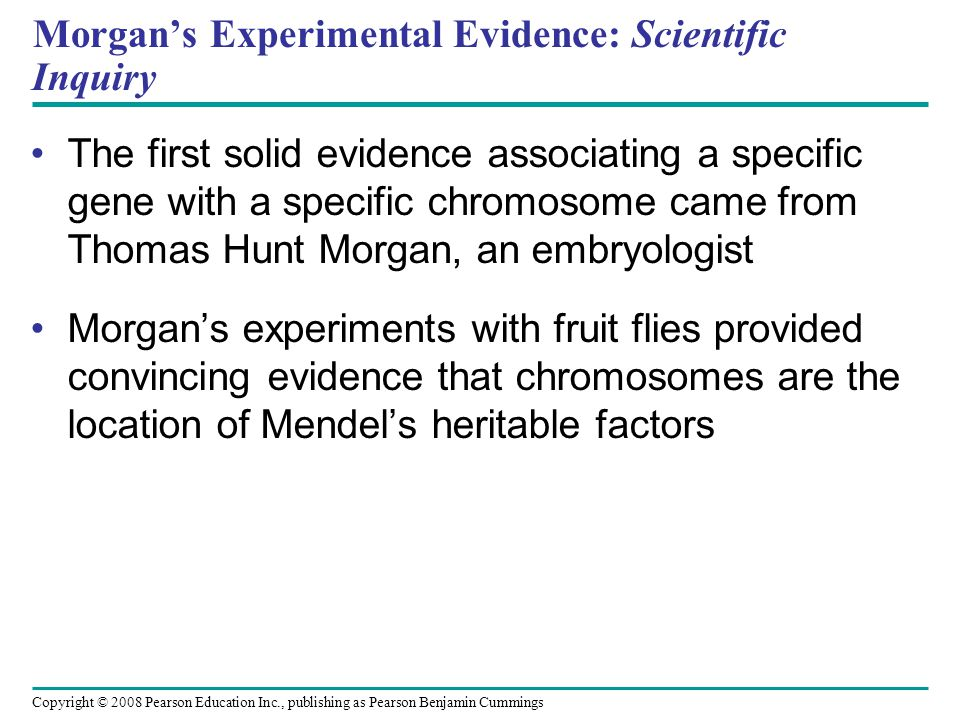 Morgan's Choice of Experimental Organism Several characteristics make fruit flies a convenient organism for genetic studies: – They breed at a high rate – A generation can be bred every two weeks – They have only four pairs of chromosomes Copyright © 2008 Pearson Education Inc., publishing as Pearson Benjamin Cummings