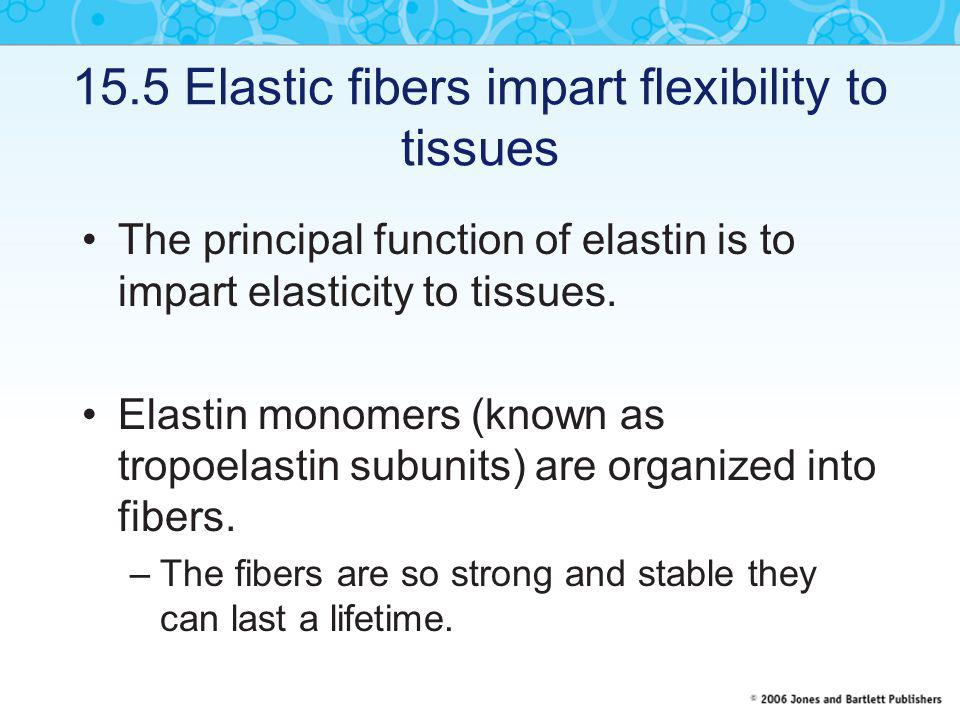 15.5 Elastic fibers impart flexibility to tissues The principal function of elastin is to impart elasticity to tissues. Elastin monomers (known as tro