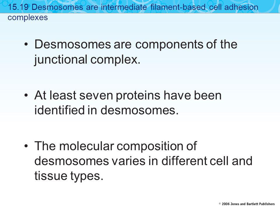 Desmosomes are components of the junctional complex. At least seven proteins have been identified in desmosomes. The molecular composition of desmosom