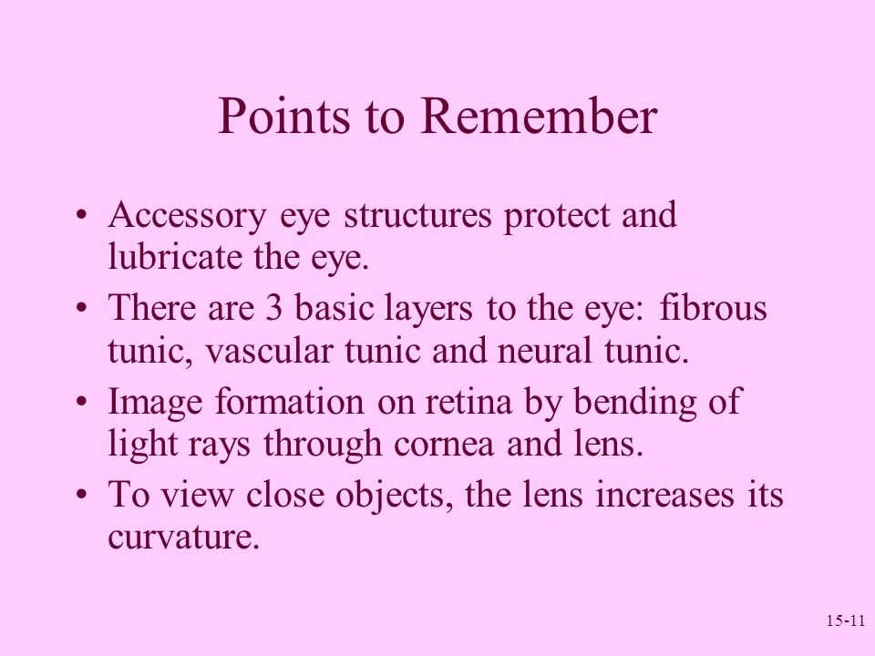15-11 Points to Remember Accessory eye structures protect and lubricate the eye. There are 3 basic layers to the eye: fibrous tunic, vascular tunic an