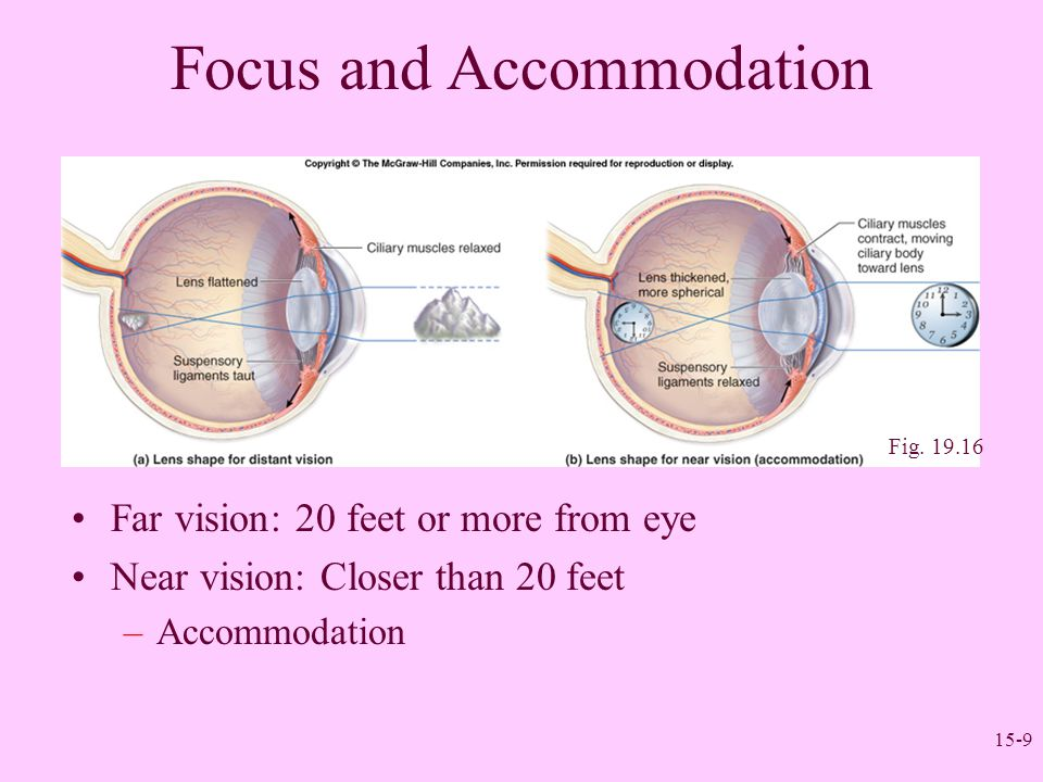 15-9 Focus and Accommodation Far vision: 20 feet or more from eye Near vision: Closer than 20 feet –Accommodation Fig. 19.16
