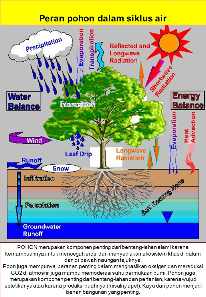 AIR TANAH = Ground water Ground water occupies the zone of saturation.