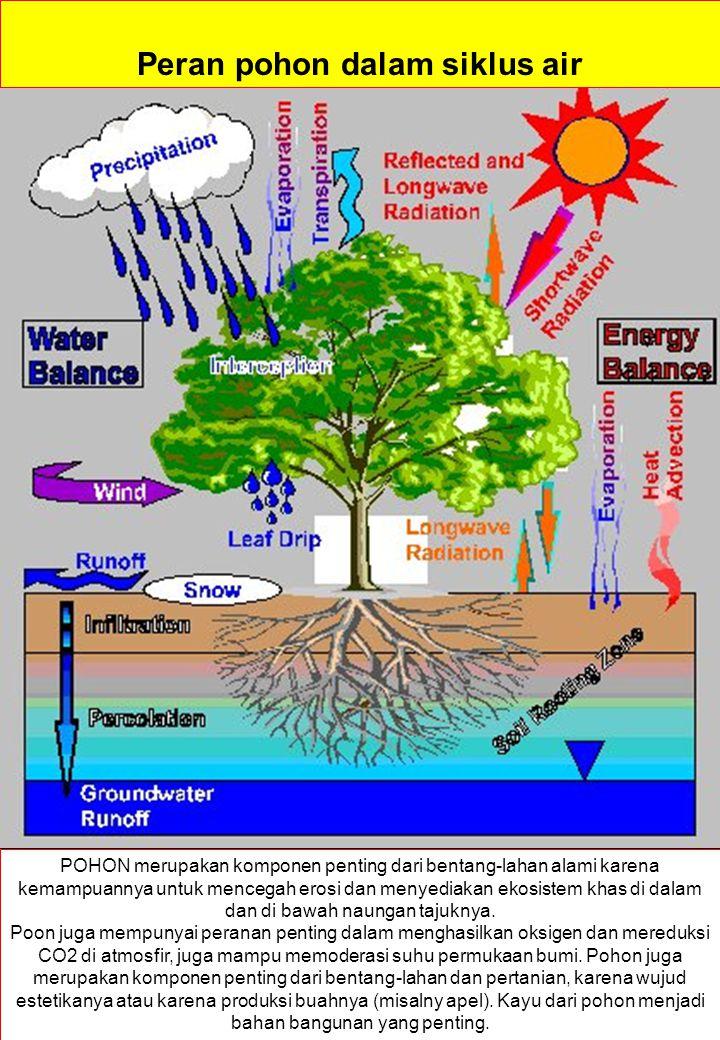 Peran pohon dalam siklus air POHON merupakan komponen penting dari bentang-lahan alami karena kemampuannya untuk mencegah erosi dan menyediakan ekosistem khas di dalam dan di bawah naungan tajuknya.