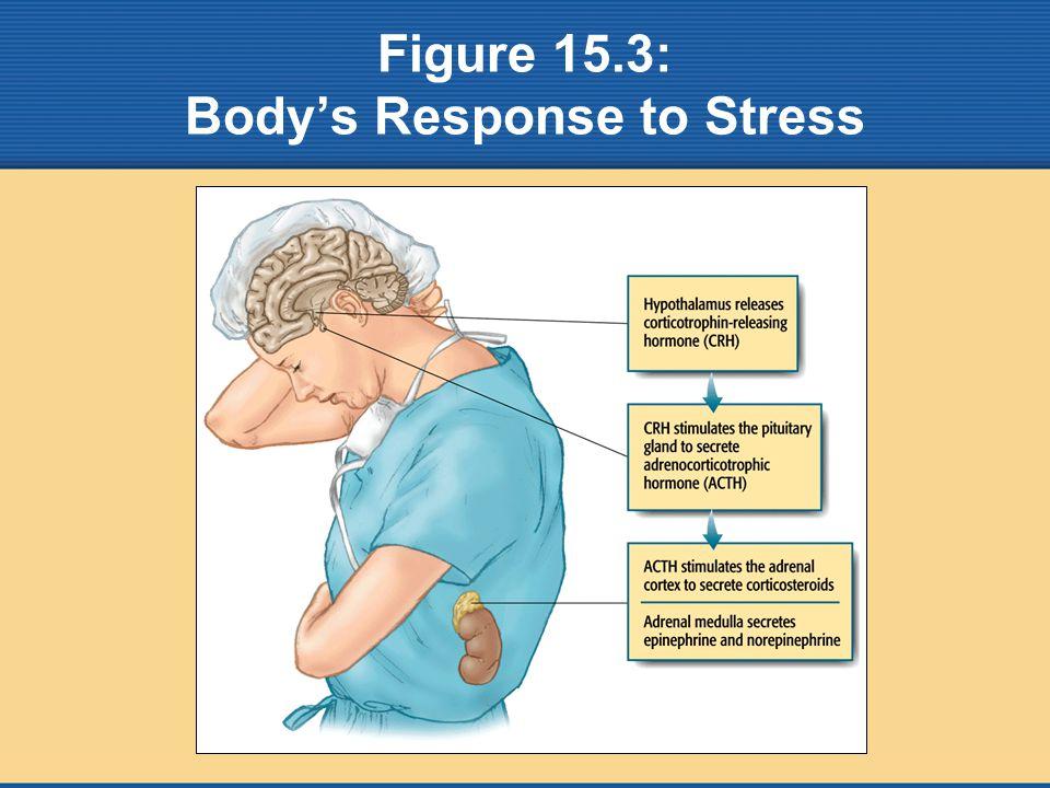 Figure 15.3: Body's Response to Stress