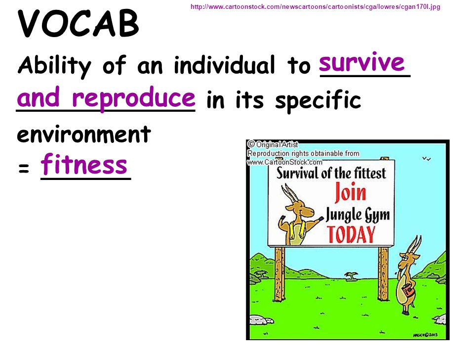 VOCAB Ability of an individual to ______ ____________ in its specific environment = ______ http://www.cartoonstock.com/newscartoons/cartoonists/cga/lo