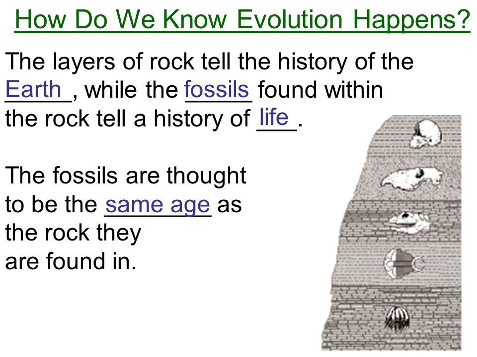 How Do We Know Evolution Happens? The layers of rock tell the history of the _____, while the _____ found within the rock tell a history of ___. The f