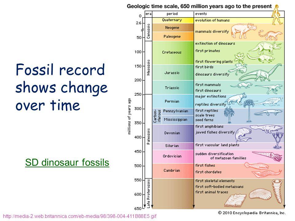 Fossil record shows change over time http://media-2.web.britannica.com/eb-media/98/398-004-411B88E5.gif SD dinosaur fossils