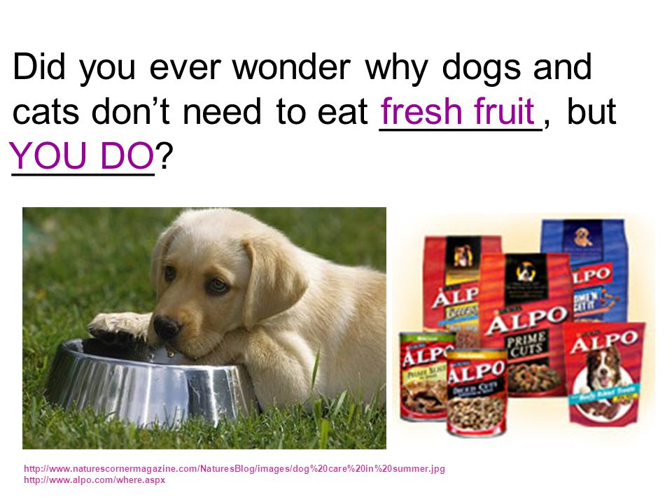 Did you ever wonder why dogs and cats don't need to eat ________, but _______.