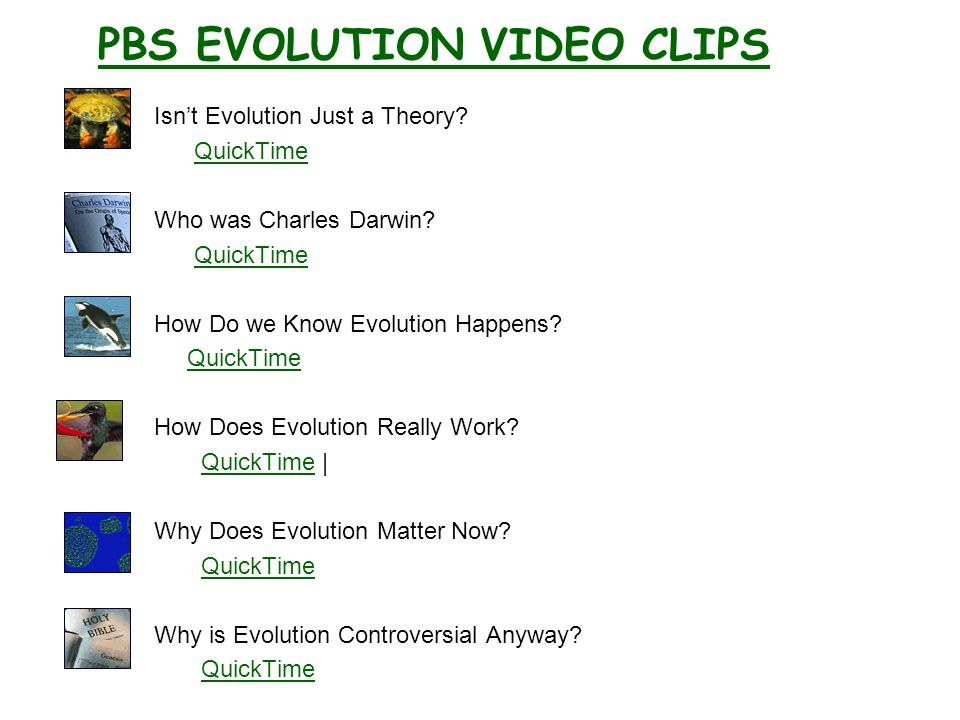 PBS EVOLUTION VIDEO CLIPS Isn't Evolution Just a Theory.