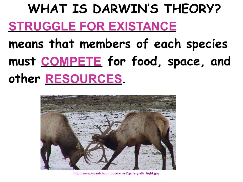 WHAT IS DARWIN'S THEORY.