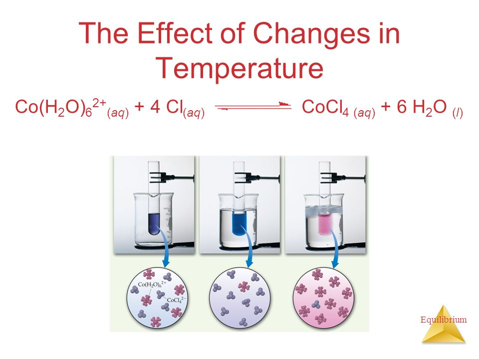 Equilibrium The Effect of Changes in Temperature Co(H 2 O) 6 2+ (aq) + 4 Cl (aq) CoCl 4 (aq) + 6 H 2 O (l)
