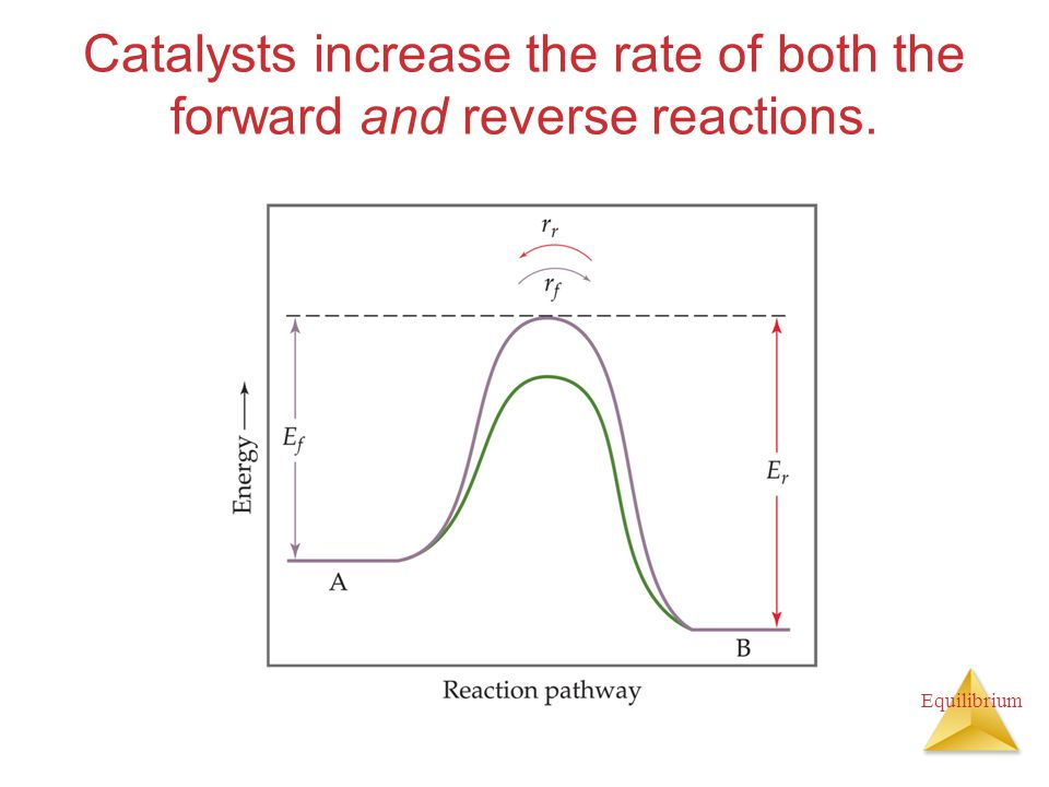 Equilibrium Catalysts increase the rate of both the forward and reverse reactions.