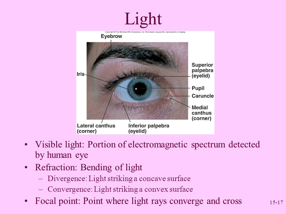 15-17 Light Visible light: Portion of electromagnetic spectrum detected by human eye Refraction: Bending of light –Divergence: Light striking a concav
