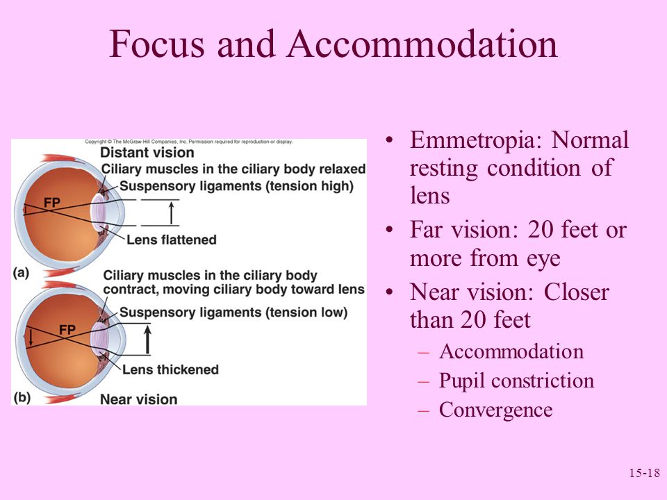 15-18 Focus and Accommodation Emmetropia: Normal resting condition of lens Far vision: 20 feet or more from eye Near vision: Closer than 20 feet –Acco