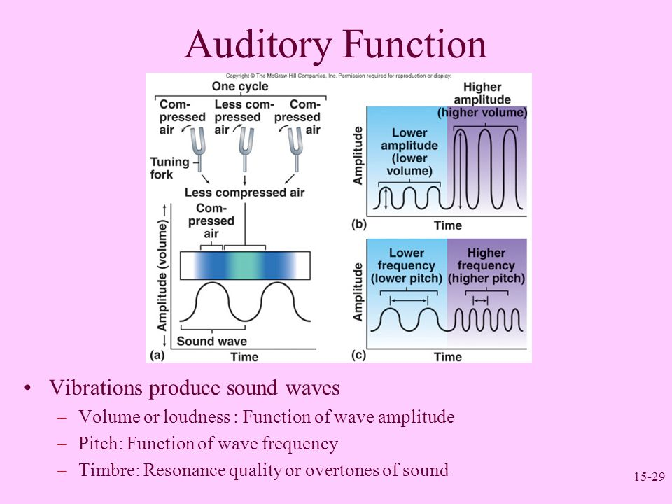 15-29 Auditory Function Vibrations produce sound waves –Volume or loudness : Function of wave amplitude –Pitch: Function of wave frequency –Timbre: Re