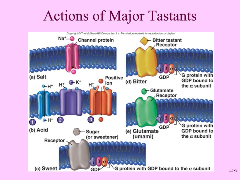 15-9 Neuronal Pathways for Taste