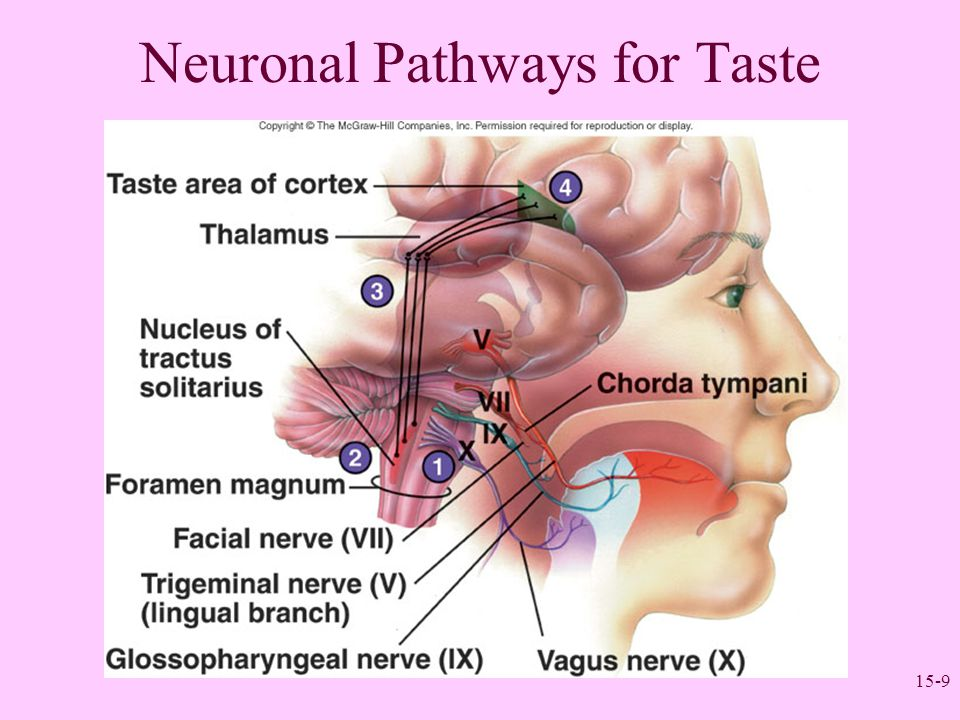 15-9 Neuronal Pathways for Taste